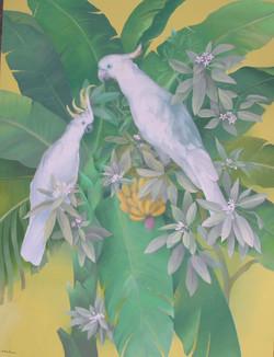 White macaws