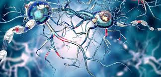 Does Stem Cell Therapy Work For Parkinson's Disease?