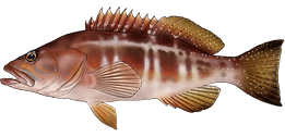 Fish of the Azores