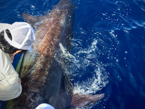 Azores: One of the World's Best Spots for Big Game Fishing