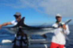Açores pêche marlin