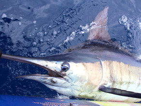Ultimate Fishing Guide for Azores