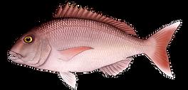 Azores Fischerei