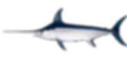 azores, fishing, charter, Fischerei, visserij