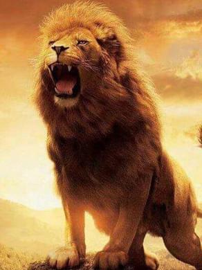 Apres les larmes, lèves toi, rugit et avances CONQUÉRANT!