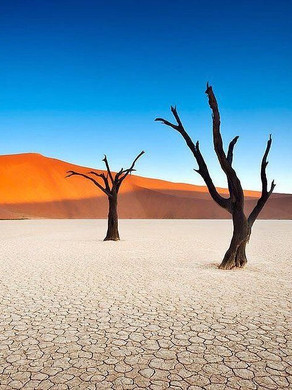 Même la terre aride est capable de porter du fruit