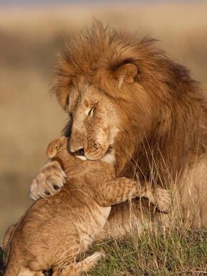 Prends moi dans tes bras Papa…