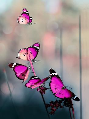 Le papillon c'est toi