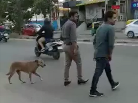 Smart streeties cross streets!