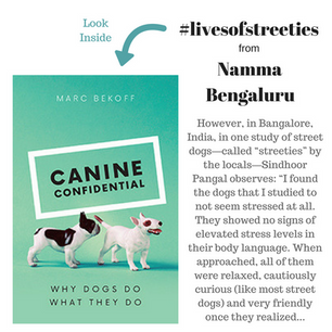 Street dog studies adding value