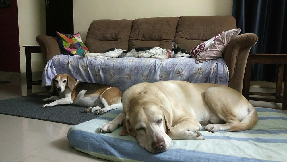Kutush enjoying the luxury of an indoor life