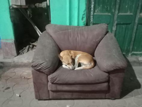 Den animals or Sofa animals?