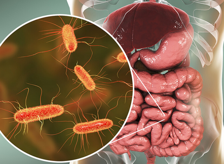 What's the BEST Probiotic??