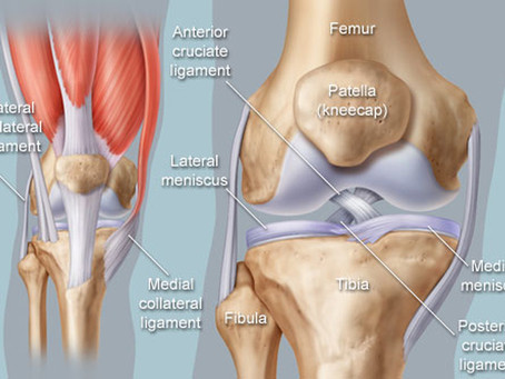 Which structures may be causing your knee pain (and how to stop it)