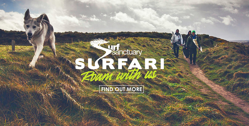 Surfari.jpg