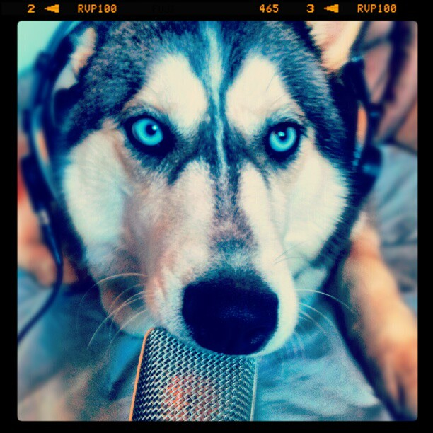 My dogs takes the mic and does her own freestyle _P