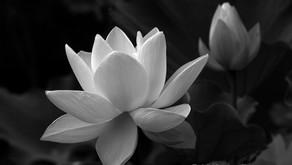 Valge Lootose meditatiivne teraapia