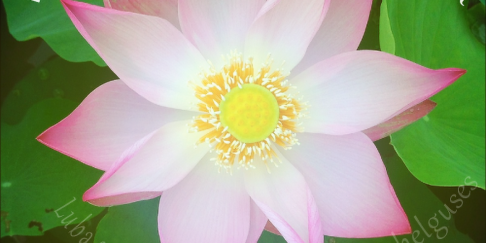 Valge Lootose meditatiivne praktika