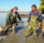 Fish Harvest - Fisherman Retrieves Fishe