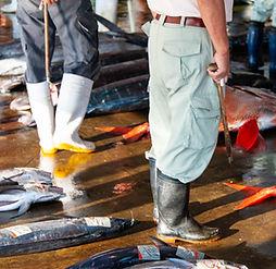 Fish landed at Wakayama fishing port.jpg