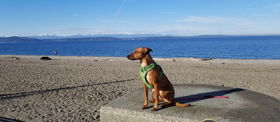 Dog Harness Review - Front Range Harness by Ruffwear