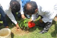 Balesore- Tree Plantation