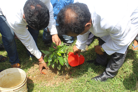 Balesore- Tree Plantation