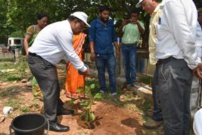 Anugul - Tree Plantation