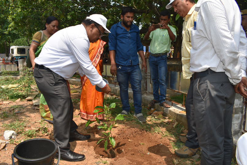 Anugul - Tree Plantation