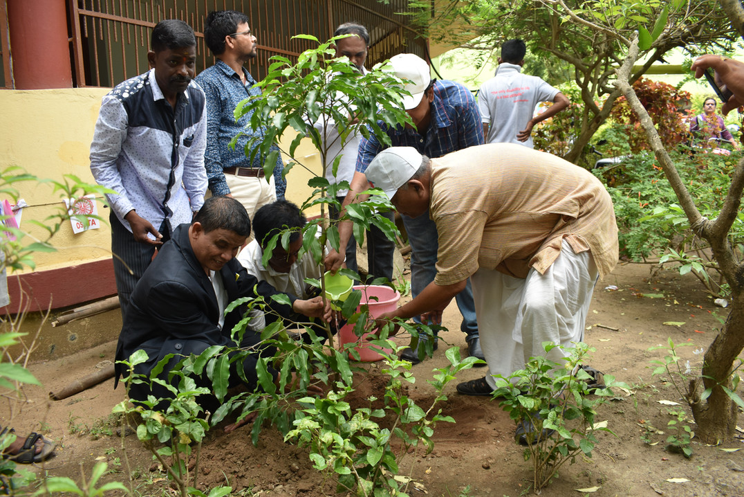 Puri - Tree Plantation