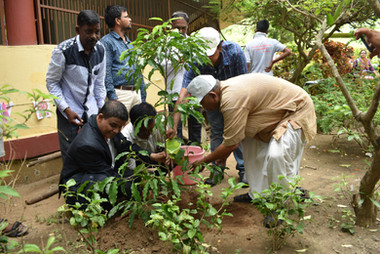 Puri - Tree Plantation