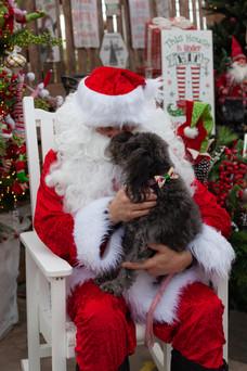 Santa Blondies 2019-5.jpg