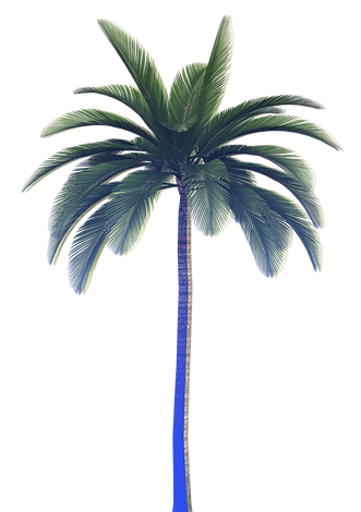 Palm_tree_edited_edited.png