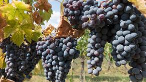 Chianti, terra de vinhos e histórias