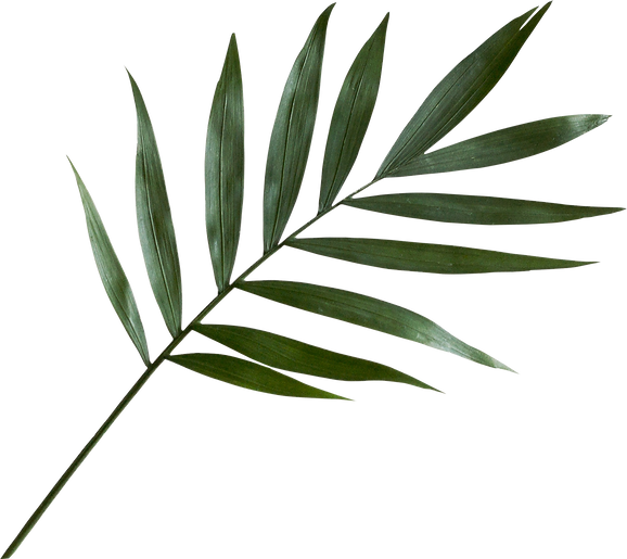 palm-leaf_png-vectorforfree.png