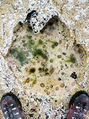 Fossil foot print, Isle of Skye