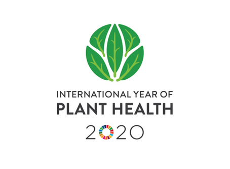 IYPH2020 FEBRUARY'S LECTURE: CHESTNUT BLIGHT