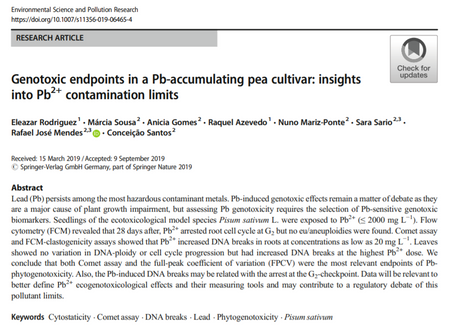 Genotoxic endpoints in a Pb-accumulating pea cultivar: insights into Pb2+ contamination limits