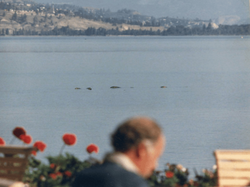 "In 1985 ,Two ogopogos were seen ""playing"" off Penticton during a wedding."