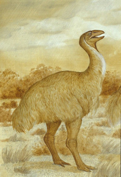 A genyornis reconstruction