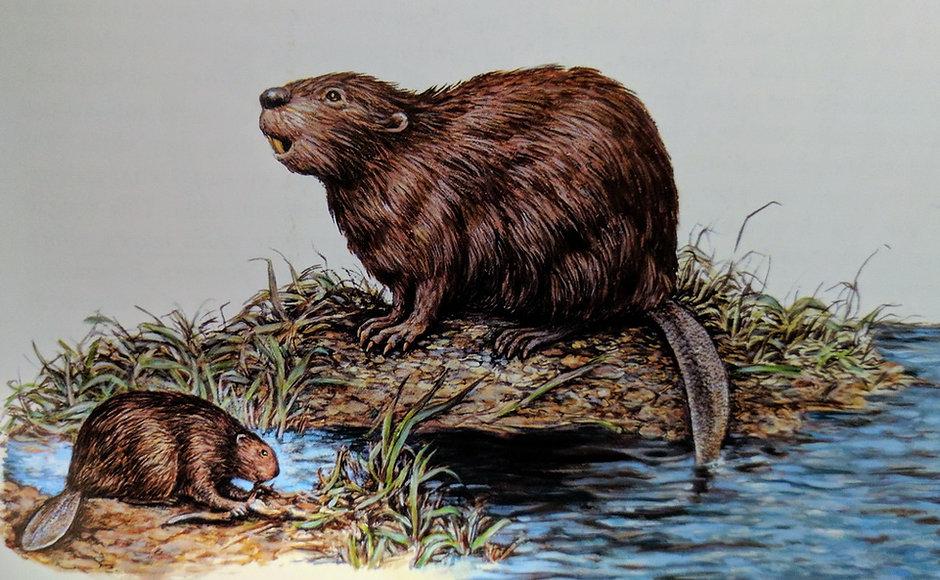 IMG_20170312_204250_Giant_Beaver_from_Ia