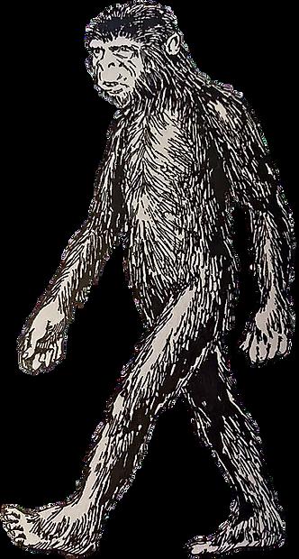 Didi illustration by Harry Trumbore