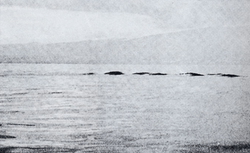The oldest known photograph of the Ogopogo, taken in 1946