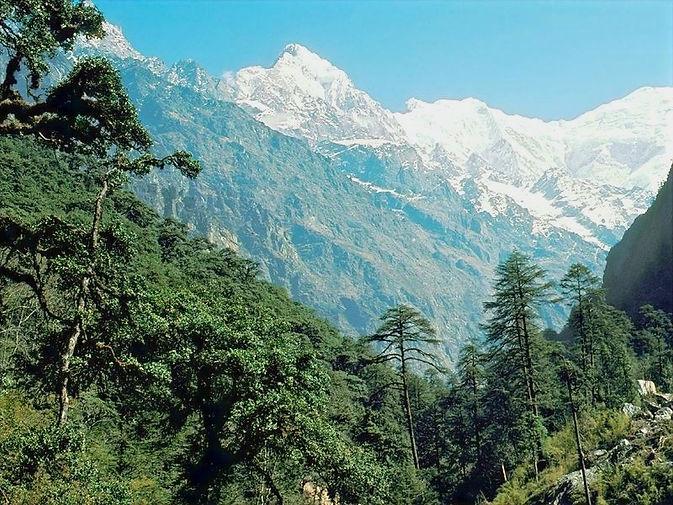 himalayan-alpine-4_edited.jpg