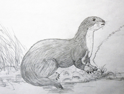 The 2009 sketch