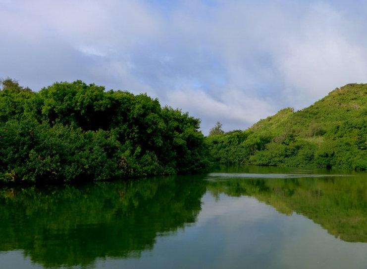 A Hawaiian pond