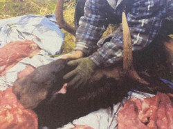 """The severed head of the underwater moose while being butchered. Its """"scarf"""" can bee seen on its chin"""