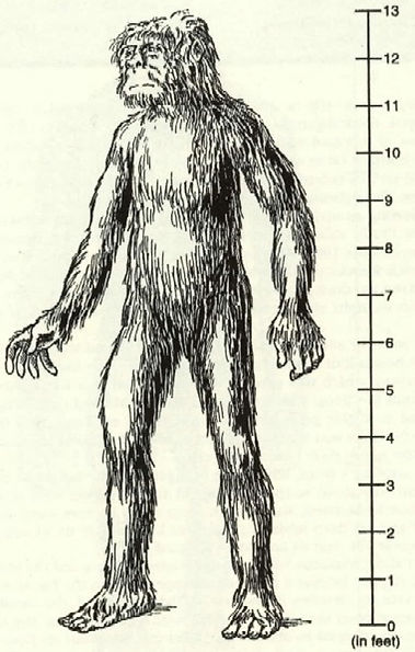 Harry Trumbore's illustration of a nyalmo