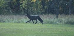 Deanna Gardiner's photos of the animal