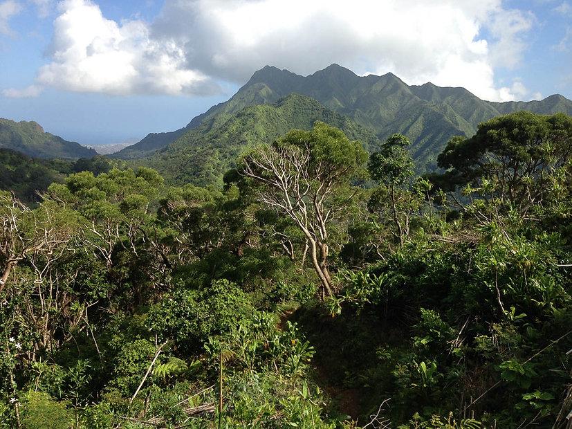 hawaii-rainforest-hike-5.jpg